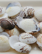 Beach Theme Shell Decorative Accessories (50 Pieces) (131036843)