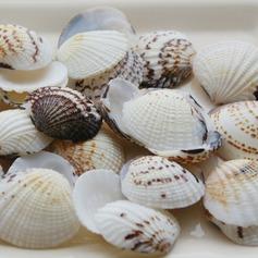 Thème de plage Coquille Accessoires décoratifs (50 pièces)